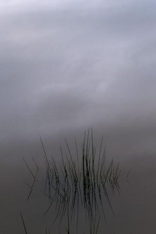 Pond by Tanuki