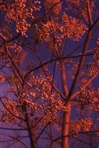 Red Tree by Ana Zaragoza