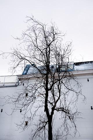 Amsteltree by Sophie Eekman, Fotohotel