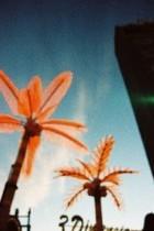 Palm Trees by Iván Rodríguez