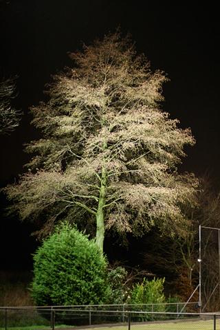 Soccer Tree by Sophie Eekman, Fotohotel